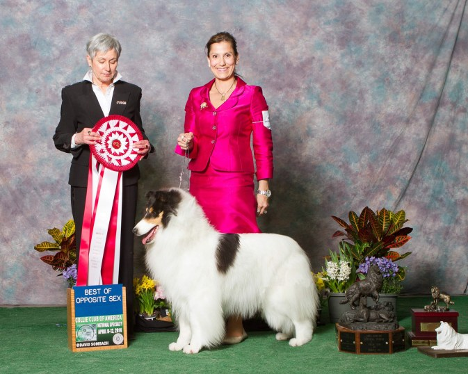 AKC White Collie - Ch. Wyndlair Classique Incandescent