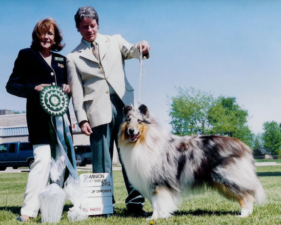 Blue Merle Collie in Canada - Ch. Wyndlair Thunder Heart, CD, ROMX