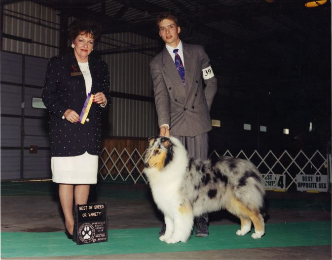 blue-merle-collie_wyndlair-secret-showcase