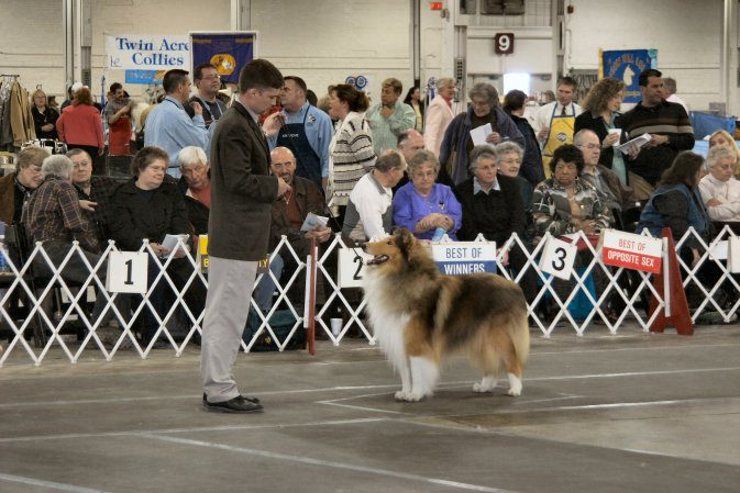 Sable Rough Collie - Barksdale Beauregard Belleville