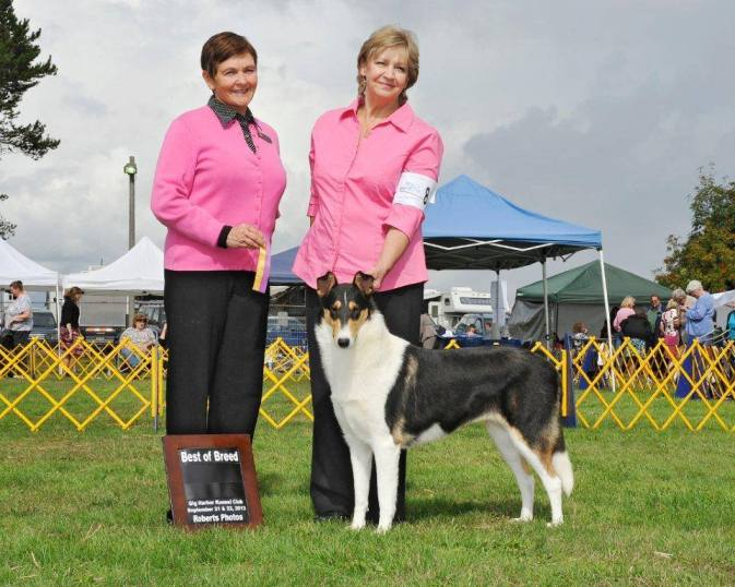 Tri-Color Smooth Collie - Ch. Wydlair Classique Enchanted