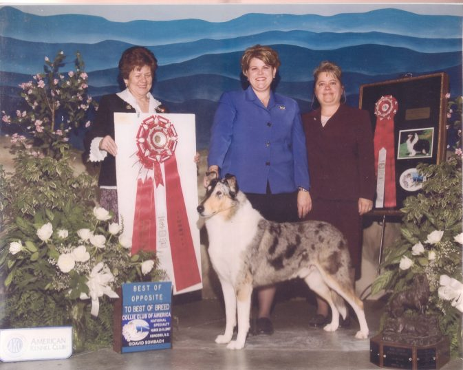 Ch. Edenrock The Mask Of Society - Blue Merle Smooth Collie
