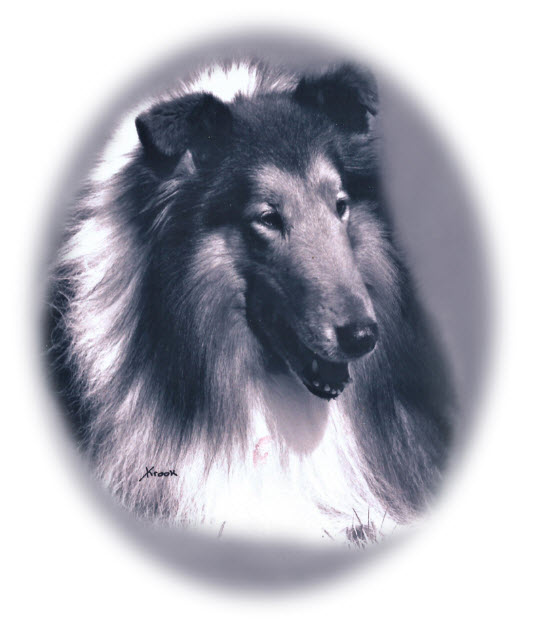 Ch. Tartanside The Gladiator - Sable Rough Collie