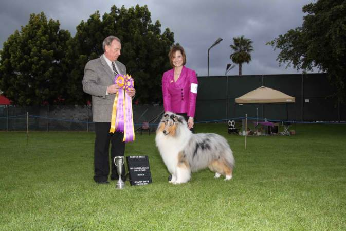 blue-merle-collie_wyndlair-cherokee-vindication_california