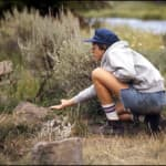 Campers often can't resist temptation to feed the park animals...<br>Photographer: C. Duchesne, Image courtesy of Yellowstone National Park.