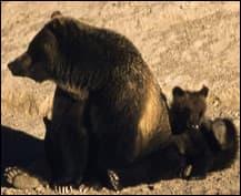 bearbynumbers-1
