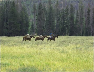 Tory traverses the Timeless Pelican Valley in Yellowstone Image courtesy of the Taylors