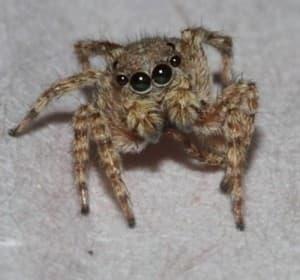 RT Spider