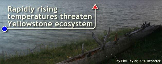 Rapidly rising temperatures threaten Yellowstone ecosystem