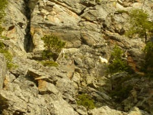 A mountain goat stands in Grand Teton National Park. Park biologists are worried about goats establishing a population in the park, which could harm big horn sheep. (Photo Courtesy/John Stephenson)