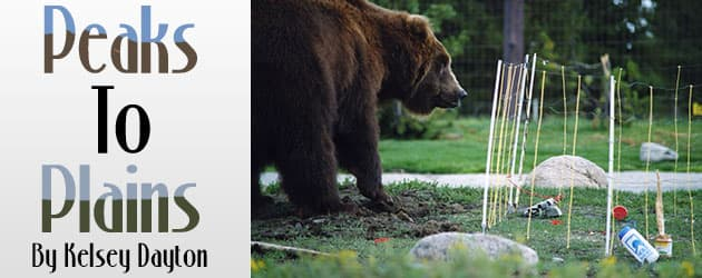 A shocking new way to store your food in bear country