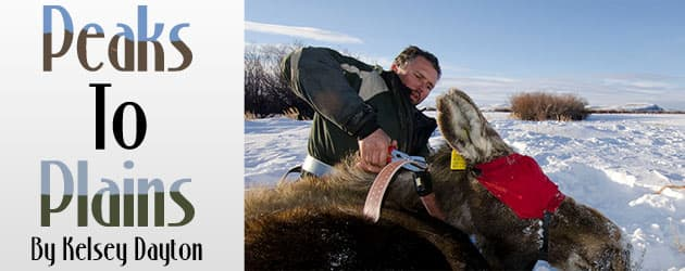 Game and fish expand moose study in Wyoming Range