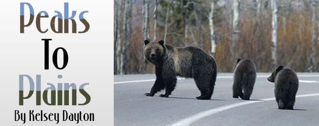 Wyoming's famous wildlife