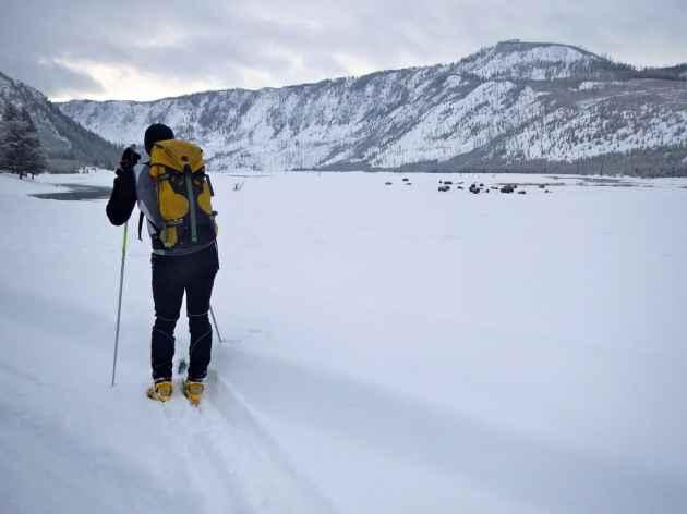 Yellowstone ski