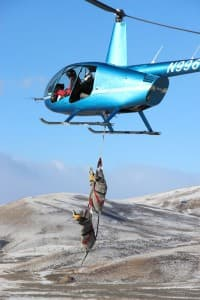 When studying mule deer that migrate between Kemmerer and Afton, biologists net does from the air, then transport them by helicopter to a base for scientific study and release. As mule deer numbers have declined in recent decades, Wyoming Game and Fish and other groups seek ways to help the population rebound. (Mark Gocke/Wyoming Game and Fish — click to enlarge)