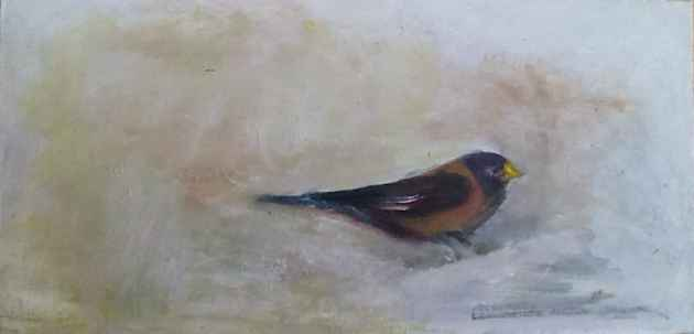 Rosy Finch - Jen Williams (click to enlarge)