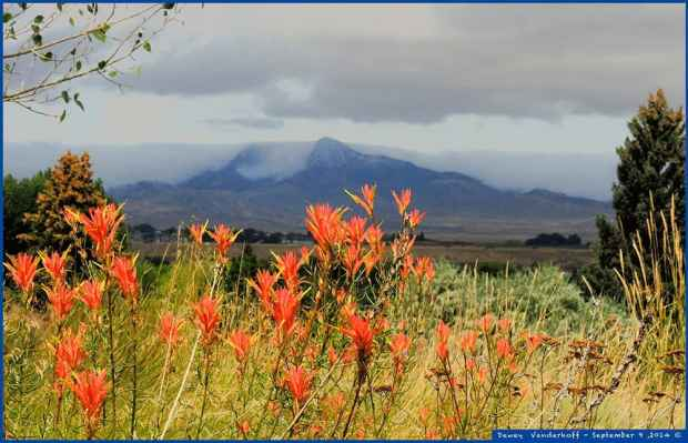 cold front coming over Heart Mountain from Montana. That is the orange variant of Wyo state flower in foreground, Indian Paintbrush. It grows 3-4 feet high in a park in downtown Cody (Photo by Dewey - click to enlarge)