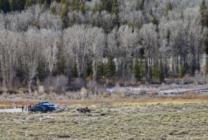 Horsemen retrieve the carcass of the grizzly that was killed on Thanksgiving Day, 2012, in Grand Teton National Park during the annual elk hunt. After that incident, the U.S. Fish and Wildlife increased the number of grizzlies it anticipates will be killed during the park hunt, boosting the estimate through 2022 from one to five.(click to enlarge)