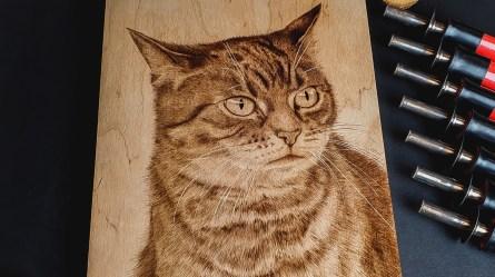 portret kota