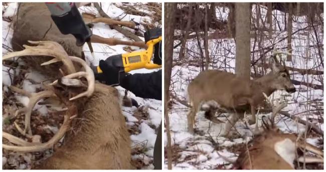 Deer Rescue_30665