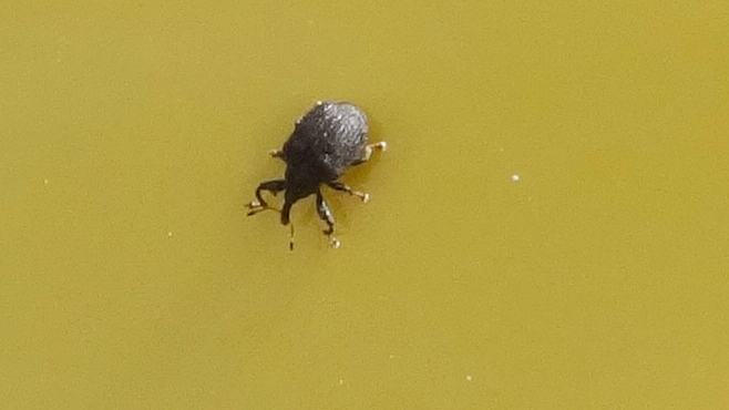 Seeing Little Black Bugs Here S What They Are