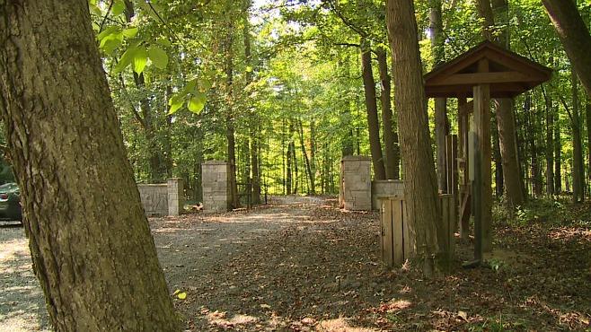 poland municipal forest woods_136253
