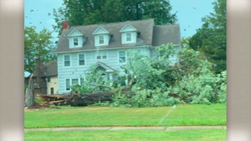 Tree down on East Market Street in Warren, Ohio.