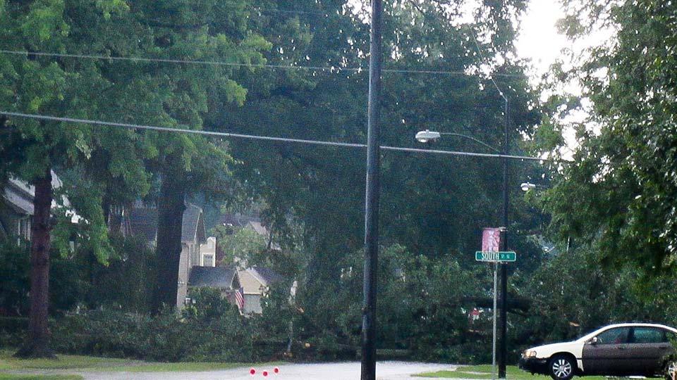 Tree down on street in Warren, Ohio.
