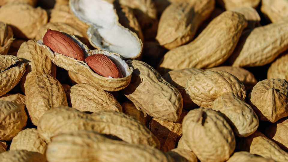 Peanuts, nut allergy