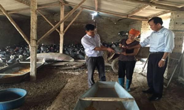 Bắc Giang: Nuôi con đặc sản, lãi gần 1 tỷ đồng/năm