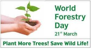 World Foresty Day