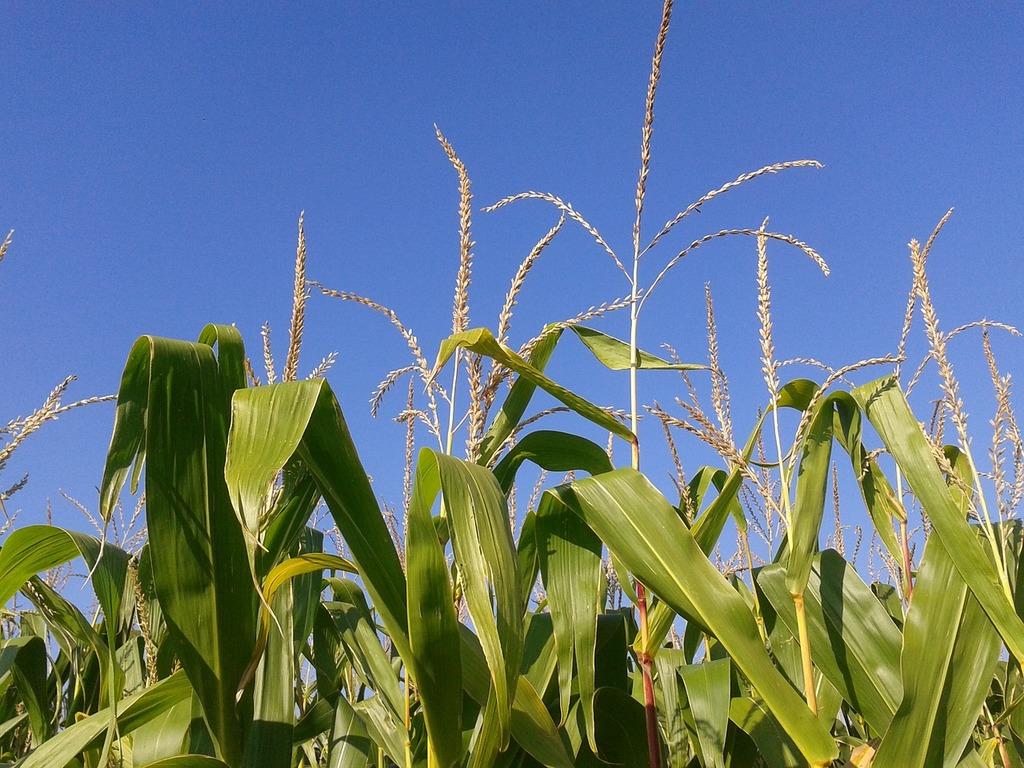 Agriculture-current-affairs