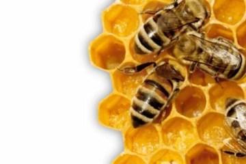 Os potes de mel: De onde vêm nossas abelhas