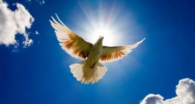 A paz de que o mundo precisa