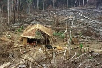 Desmatamento: Sinal Vermelho nas Terras Indígenas