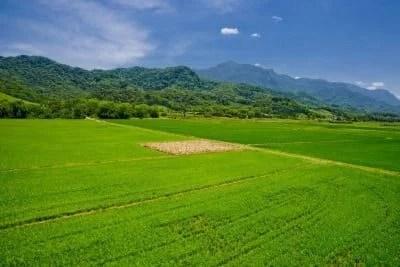 2.552 áreas desmatadas protegidas