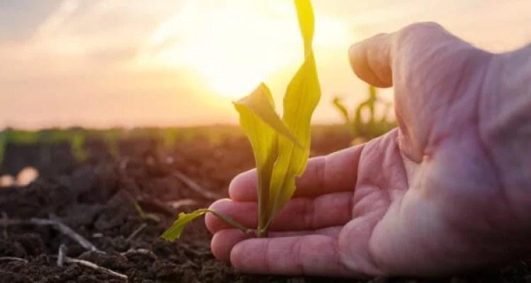 O futuro do agronegócio brasileiro depende da preservação do meio ambiente