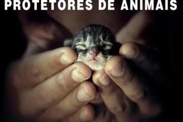 O seu comportamento em relação aos animais diz muito sobre quem você é