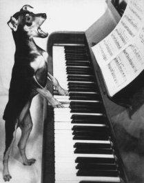 Piano by Dog