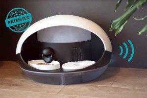 Internet des objets: l'ère de la gamelle connectée pour chat est arrivée!