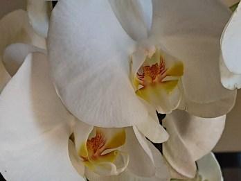 Sony Xperia XZ2: floral, zoom 5x.