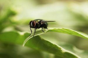 Perder el tiempo mirando moscas volar