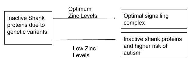 Maternal Zinc Intake And Autism Risk