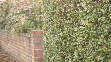 hedge1-1024x576 Fujinon MK18-55mm t2.9 E-Mount zoom lens.