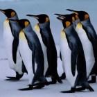 Dato Curioso: ¿Cómo mantienen los pingüinos su calor corporal?