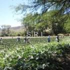Seis mil niños mixtecos abandonan escuelas para trabajar en campos agrícolas: IOAM