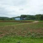 Provoca migración abandono de campos y deserción escolar en Gabino Barreda