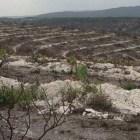 Conmemoran Día Mundial de la Lucha contra la Desertificación y sequía en Suchixtlahuaca