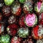 REPORTAJE. La Pitaya, un manjar hecho fruta