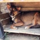 Se han emitido más de 170 recomendaciones a dueños de mascotas